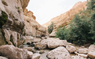 """A Review of """"Together in Galilee"""" by Robert Martin"""